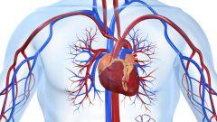 Как помочь работе сердечно-сосудистой системы