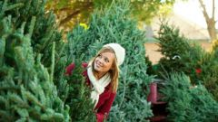 Как выбрать живую елку на Новый год