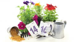 Посевной календарь для садоводов-огородников