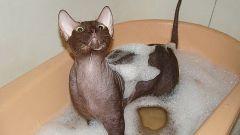Как помыть кошку в ванне
