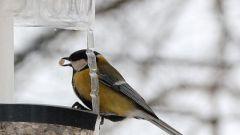 Как сделать кормушку для птиц из пластиковой бутылки