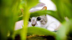 Как кошки охотятся