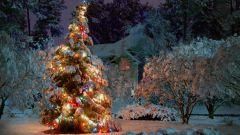 Особенности встречи Нового 2015 года - года Синей Деревянной Козы