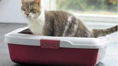 Как отучить кошку пачкать где попало