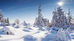 Зимние праздники: всемирный день снега
