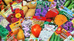 Какие семена можно покупать впрок