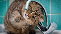 If the cat doesn't drink water
