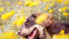 Домашние питомцы: когда у щенков меняются зубы