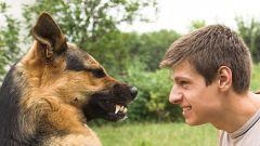 Как подружиться с собакой?