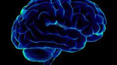Какие продукты улучшают мозговую деятельность?