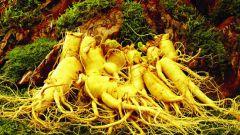 Какое растение называют корнем жизни