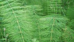 Эффективны ли ядовитые травы для лечения онкологии
