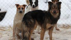 Нужны ли приюты для животных