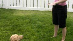 """Как обучить собаку команде """"Лежать"""""""