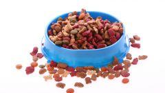 Как выбрать сухой корм собаке