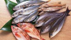 Какая рыба вкуснее: морская или речная?