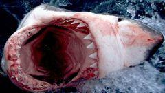 Какие есть фильмы про акул