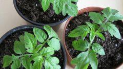 Когда сеять помидоры на рассаду в 2014 году