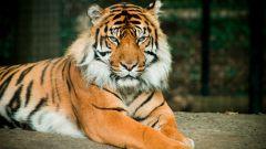 Какой хищник самый опасный в мире
