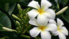 Какие выбрать благоприятные комнатные растения