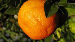 How to plant home orange