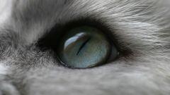 Как видит кошка окружающий мир