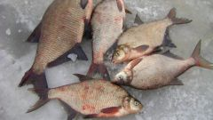 How to prepare the bait for the bream