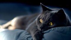 Что делать, если заболела кошка