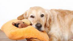 Сколько недель длится беременность у собаки