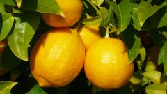 Как употреблять яйцо с лимоном при сахарном диабете