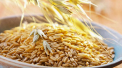 How useful infusion of oats and how to drink it