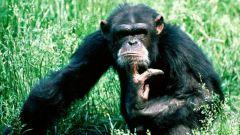 Какое животное самое умное