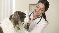 Что делать, если у собаки рвота пеной