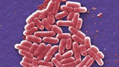 How to treat E. coli in the home