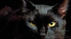 Почему считают, что черные кошки приносят несчастье