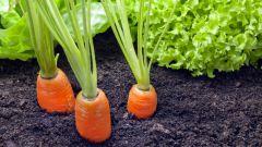 Что такое минеральное питание растений