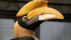 Сколько живут птицы