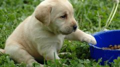 Какой лучший сухой корм для собак