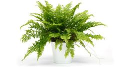 Is it possible to grow the fern house