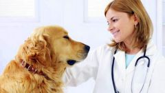 Как лечить защемление позвонков у собаки