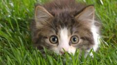 Что делать, если болят уши у кота