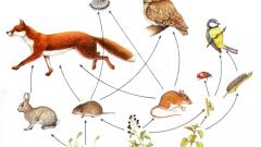 Какие цепи питания в природе