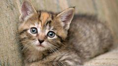 Что делать, если котенок не ходит в туалет по-большому