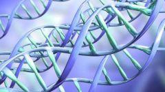 Что такое аллельные гены