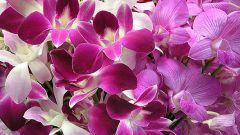 Как ухаживать за орхидеями зимой