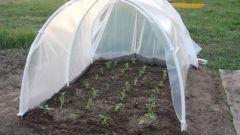 Простой способ вырастить рассаду помидоров
