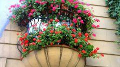 Домашний цветник