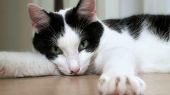Кошка проявляет недовольство – как избавиться от запаха?