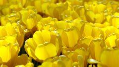Влияние желтого цвета на человека