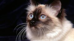 Какое зрение у кошек